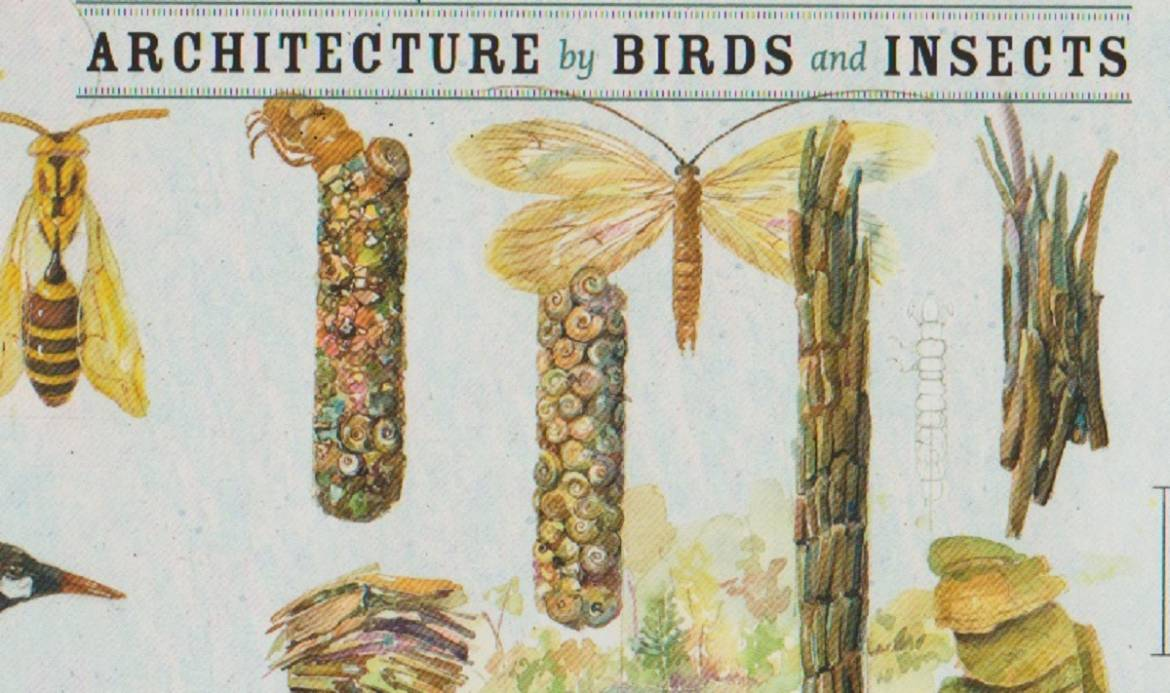"""Book review: """"Architecture by Birds and Insects: A Natural Act"""" by Peggy Macnamara"""