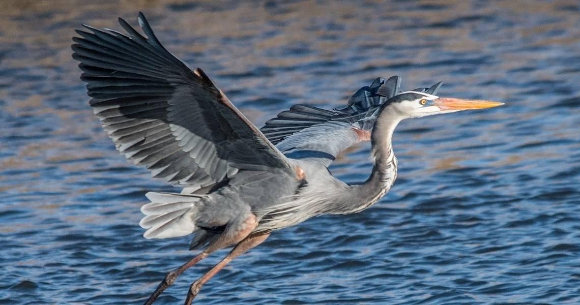 Poem: Heron